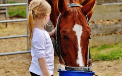 Stress Relief the Equine Way
