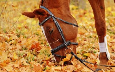 Managing Anxiety for Horse Riding
