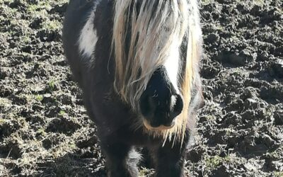 Need a Kick-Start to Spring With Your Horses?